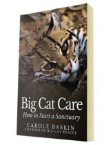 Big Cat Care, How To Start A Sanctuary