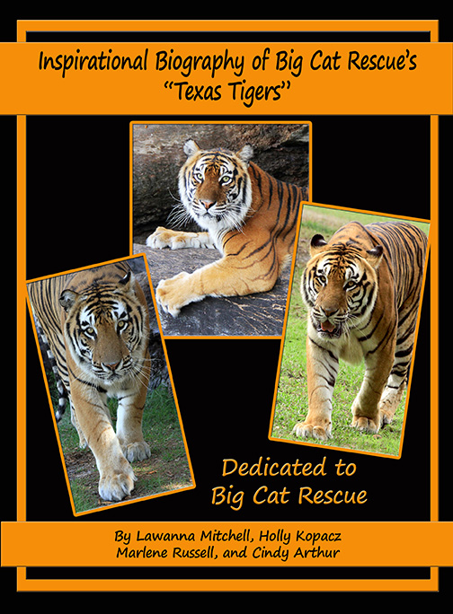 Inspirational Biography of Big Cat Rescue's Texas Tigers