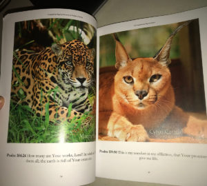 Book 100 Inspirations Big Cat Style